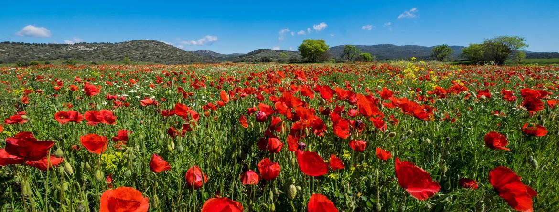 28 maggio : Giornata Mondiale delle Mestruazioni